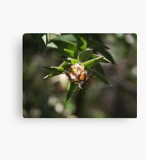 Insect on flower Canvas Print