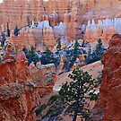 Sunsetting over Bryce Canyon..Utah by aussiedi