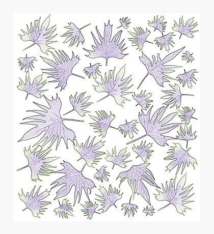 Canary Vine Leaves - Purple And Green Photographic Print