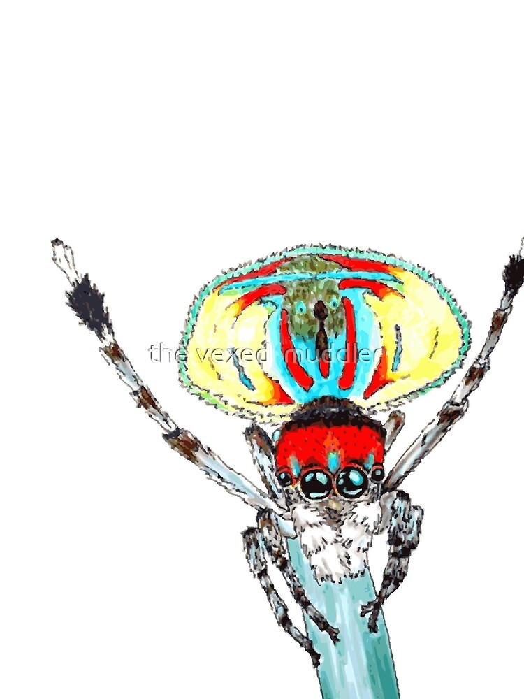 Peacock spider Maratus volans by thevexedmuddler