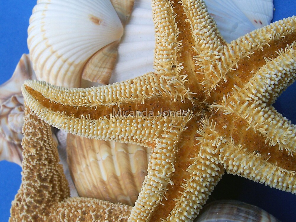starfish by Miranda Jones