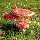 Amanita Muscaria, Mushrooms by ienemien