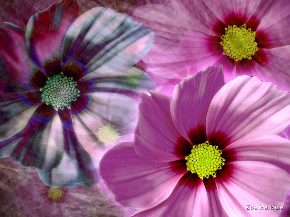 Brilliant Pink by Zoe Marlowe