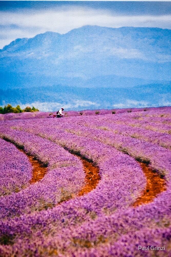 Lavender fields forever... by Paul Grinzi