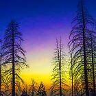 USA. California. Trees. Silhouettes in Sunset. by vadim19