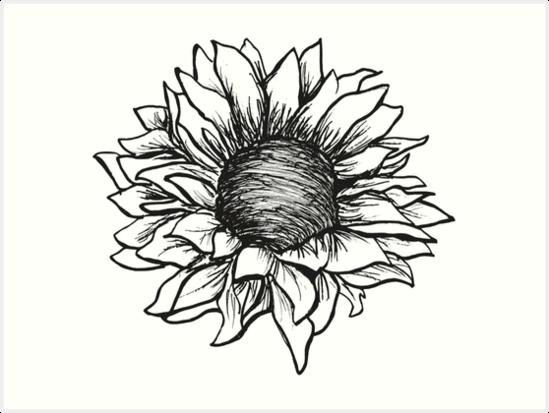 Láminas Artísticas Dibujo De Girasol Blanco Y Negro De Claire