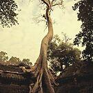 Angkor tree by Amagoia  Akarregi
