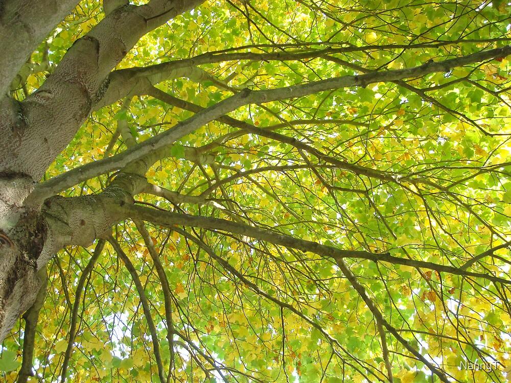 Tree Tops by NannyT