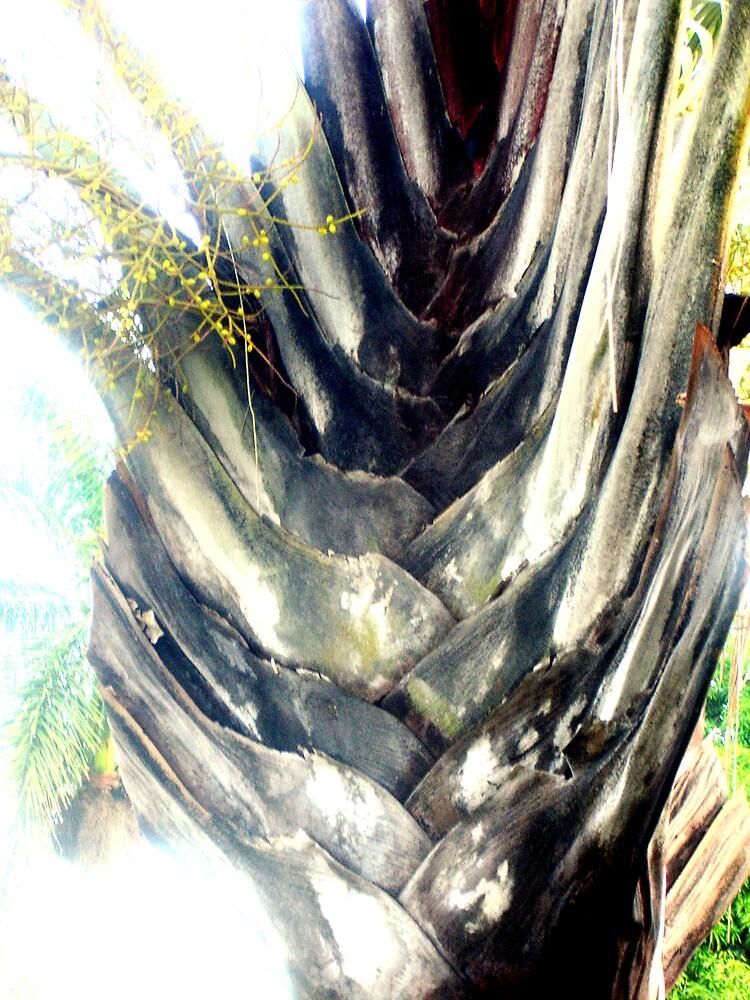 the traveler tree by Elizabeth Rodriguez