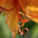 World in a droplet by Susan van Zyl