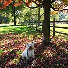 October Westie by MarianBendeth