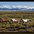 Home on the Range by Richard  Gerhard