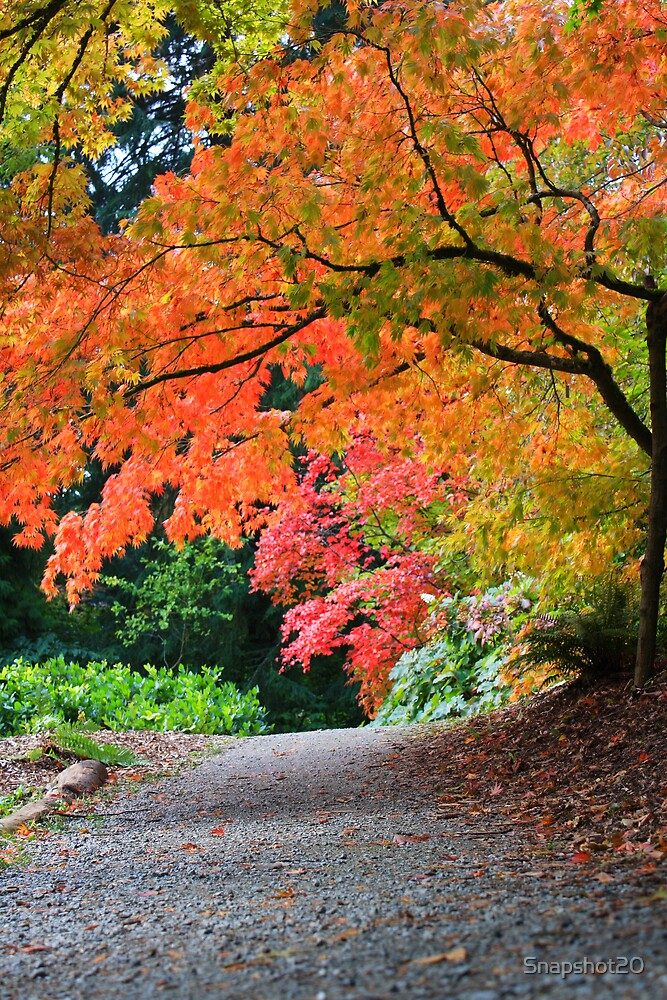 Japanese Maples by Snapshot20