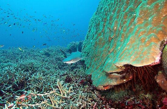 Reefy by MattTworkowski