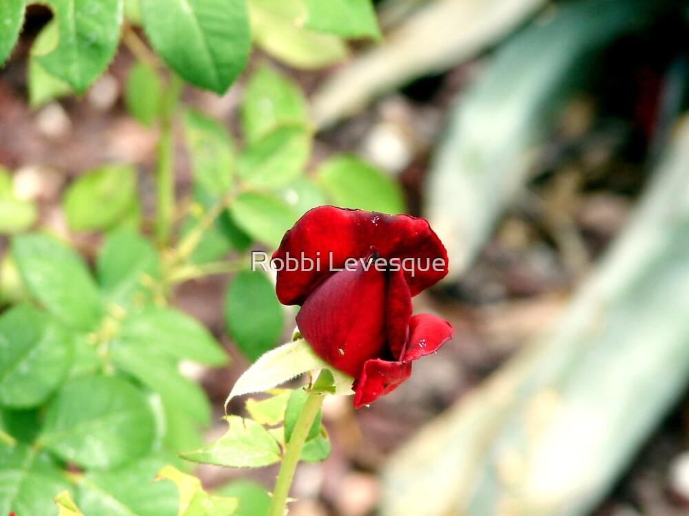 Crimson Rosebud by down23