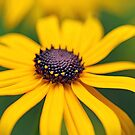 Yellow Rays by Debbie Oppermann