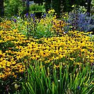 Summer Garden  by Debbie Oppermann
