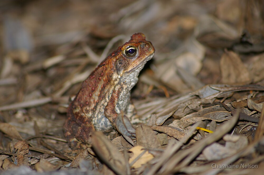 Cane Toad by Charmaine Nelson