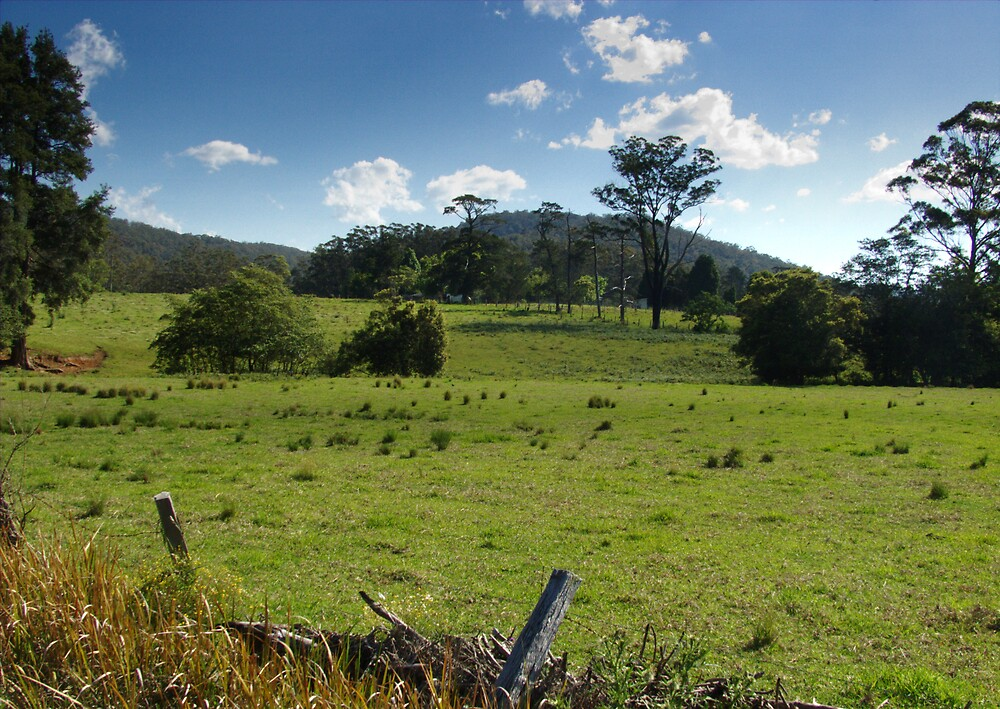 behind Martinsville, New South Wales by adam pearson