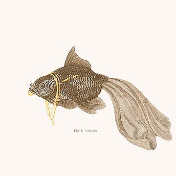 Goldfisch von jacquesmaes