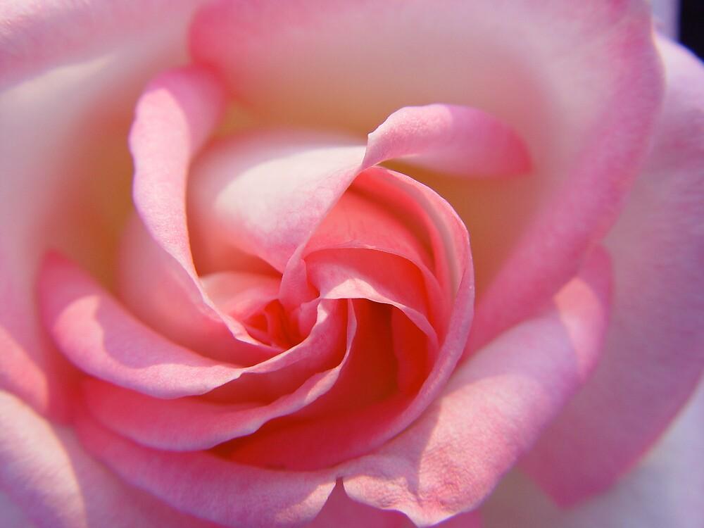 Rose by Selena Dittberner