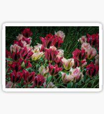 Tulips of Keukenhof Sticker