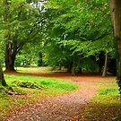 Walk in the Woods by Trevor Kersley