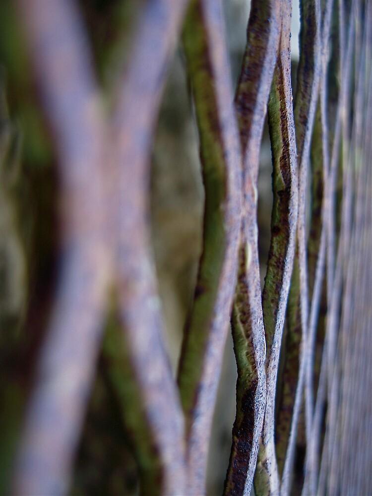 Rusty gate by Francesca Rizzo