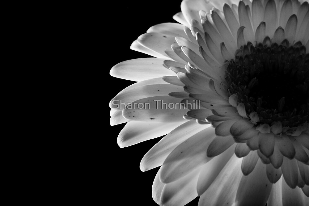 flower by Sharon Thornhill