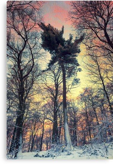 Winter Afternoon by Dirk Wuestenhagen