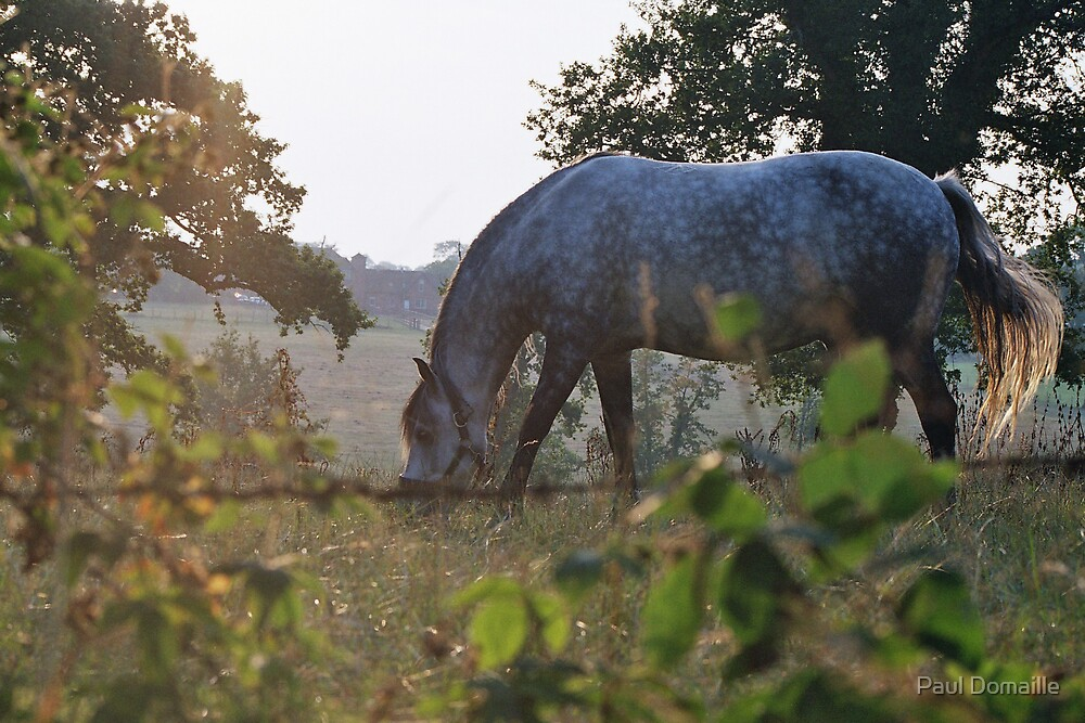 Grey pony by Paul Domaille