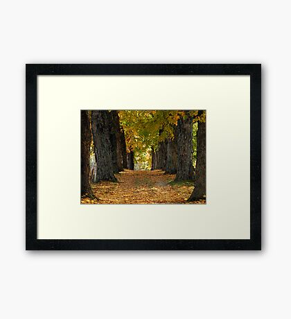 New Hampshire Foliage 2008 #11 Framed Print