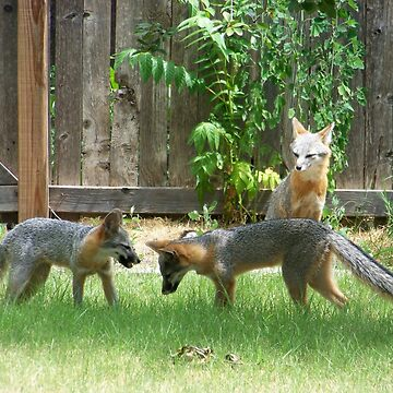 Fox Family by deleas