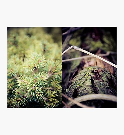 diptych #2 Photographic Print