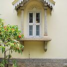 Old Window by Entropy