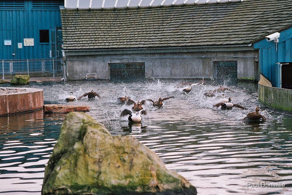 Penguin enclosure  by Paul Domaille