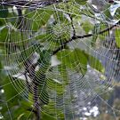 Spider web. by ailene