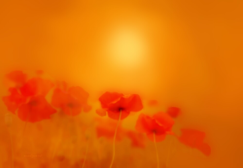 Poppies in gold  by Valerie Anne Kelly