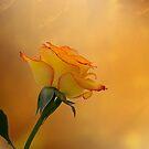 Rose Beauty by Kathy Weaver