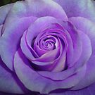 Anniversary Remnant in Deep Lavender by Deb  Badt-Covell