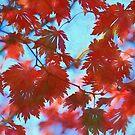 Beautiful Red Leaves by Bonnie M. Follett