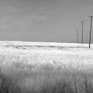 Infrared Field by antonywilliams