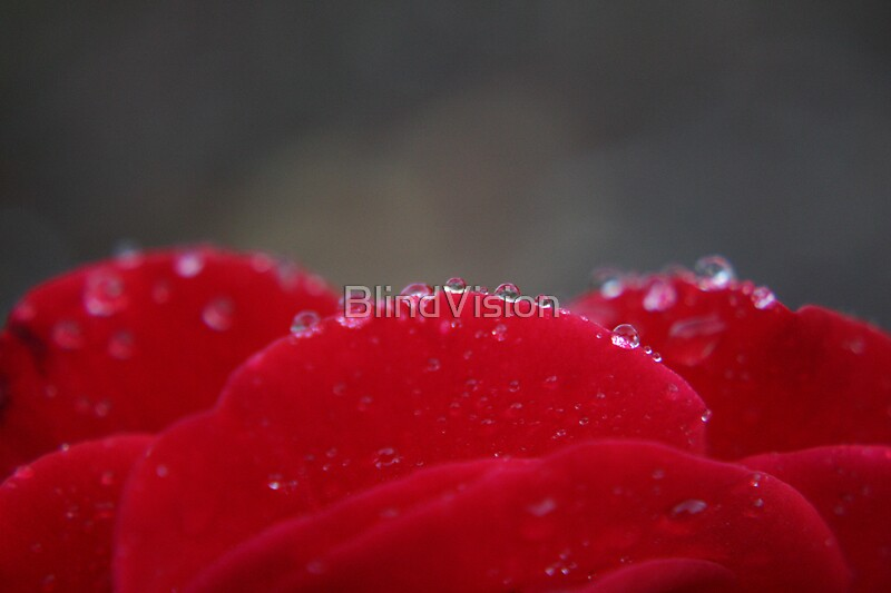 Mountain tops of a rose by BlindVision