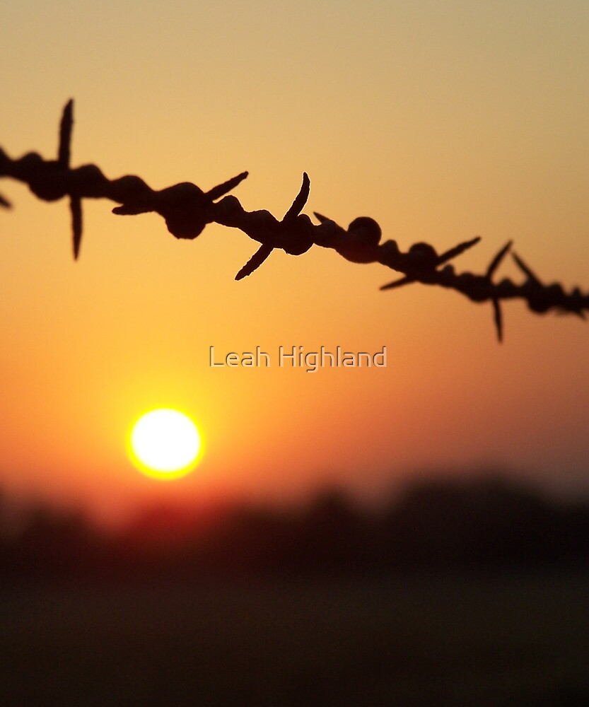 Barbed Beauty by Leah Highland