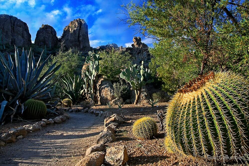 Desert Path by Sue  Cullumber