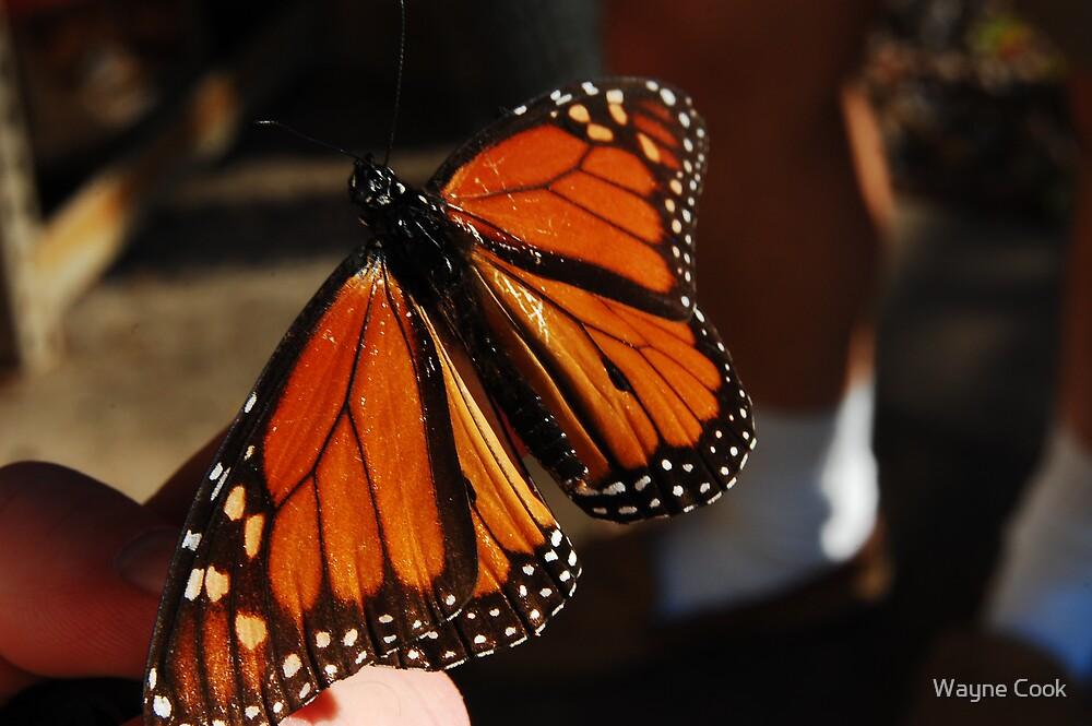 War torn butterfly by Wayne Cook