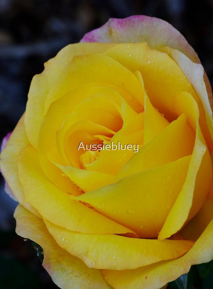 Yellow Rose. by Aussiebluey