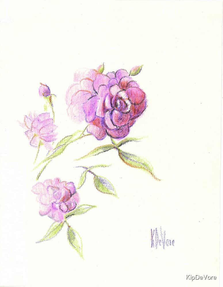 Lavender Rose by KipDeVore