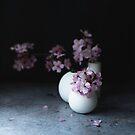 Moody spring blossom by Cristina Colli