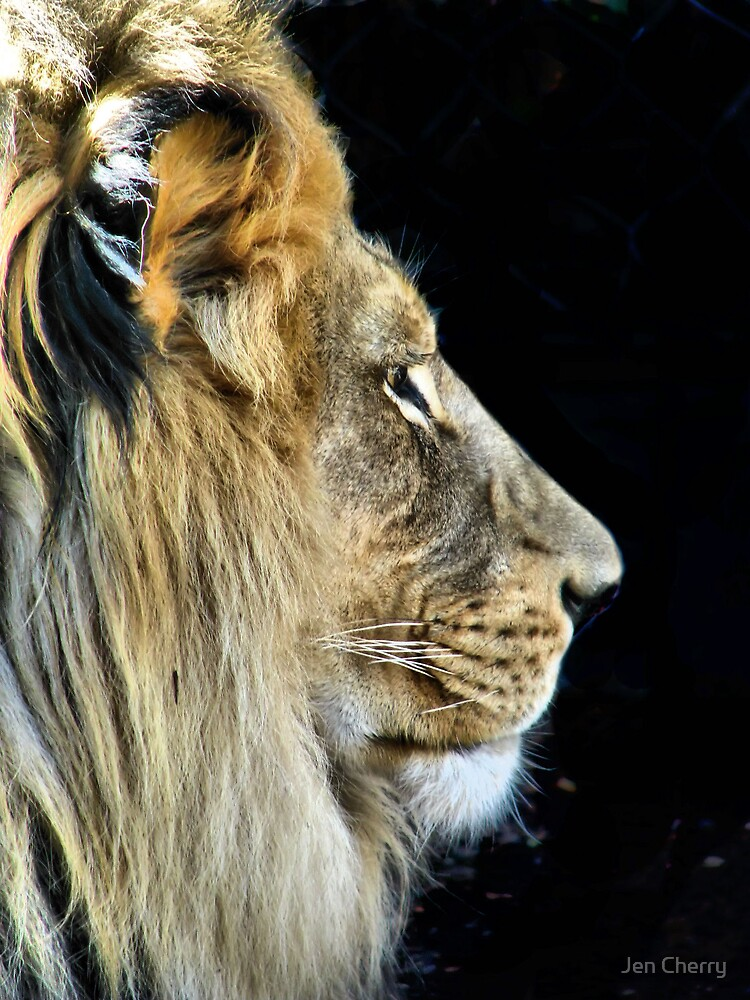 King of the Jungle by Jen Millard